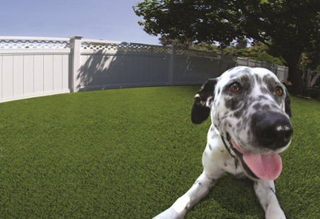 turf for pets